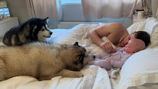 Waking Up With Malamutes And Baby, This Is Our Morning Routine (Cutest Doggos Ever!!)