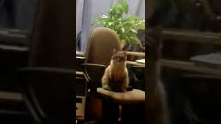 Кот - горящие глаза (Cat flash eyes)