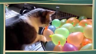 FANNY CATS Коты и Воздушные Шарики! Смешные животные