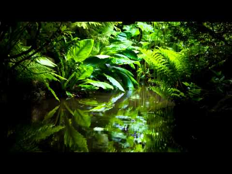 Royalty free Nature Ambient | Jungle sounds | Birds | Drone | African Percussions