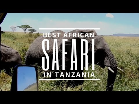 Best African Safari in Tanzania Africa | Find Yourself in Africa | Destined to Travel
