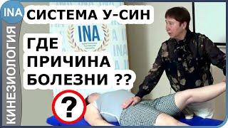 У-СИН. Где причина болезни? Прикладная кинезиология. Проф. Л.Ф. Васильева