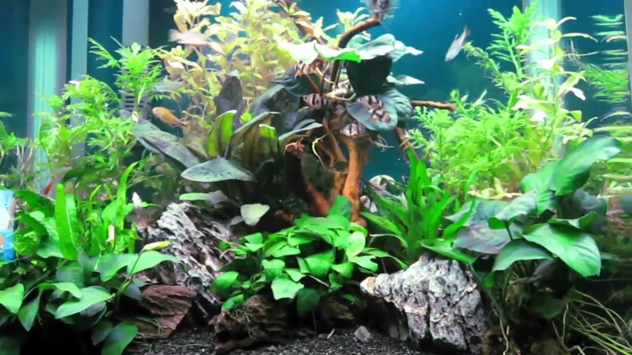 & Aqua One 620T Planted Aquarium - YouTube azcodes.com