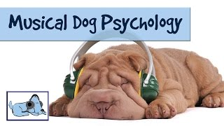 Musical Dog Psychology - Overcoming Anxiety in Canines