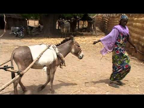 Diyam Wala: water and life in Kalfou Cameroon by Hamidou Moussa Dairou