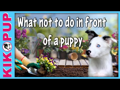 What NOT to do in front of a puppy