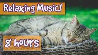 Soothing Music for Anxious Cats! Get Rid of Stress or Anxiety with this Relaxing Cat Song Playlist!