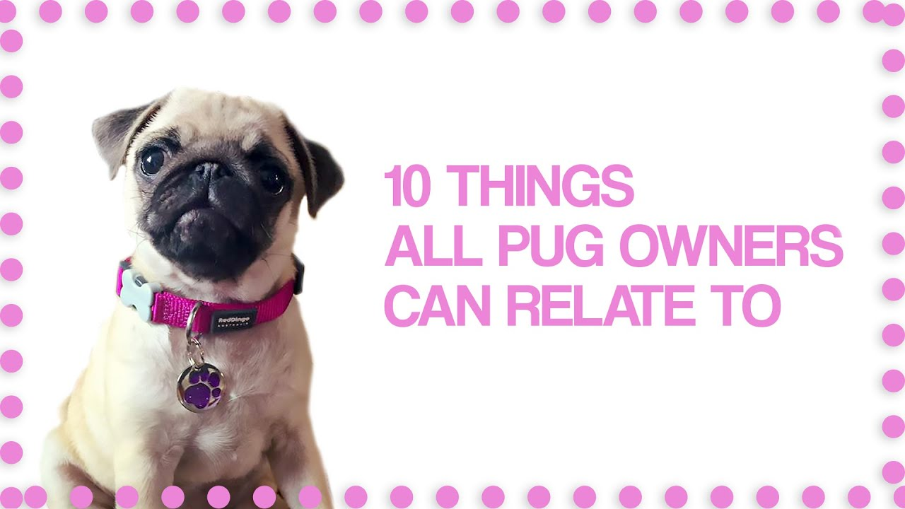 10 Things Pug Owners Can Relate To