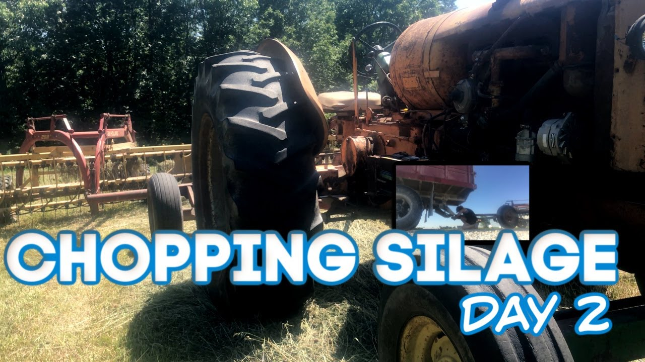 Chopping Silage with Minneapolis Moline | Hay Silage Day 2