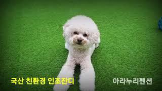 아라누리펜션 인조잔디 공사
