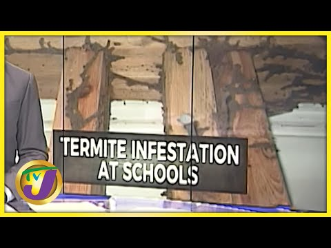 Termite Infestation at Some Schools in Jamaica | TVJ News - July 26 2021