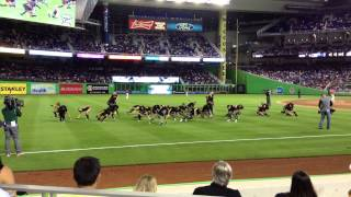 "2014 Miami Marlins Opening Night - Marlins ENERGY TEAM ""BANG!"""