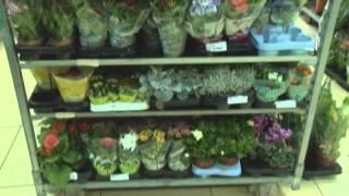 видео Организация цветочного бизнеса