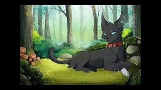 Коты Воители - Клип Я знаю точно наперед (Заказ)