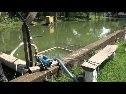 Elaboracion tanque artesanal zamorano vob funnydog tv for Hule para estanque