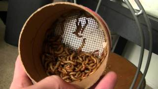 Fluker Farm Insect Review