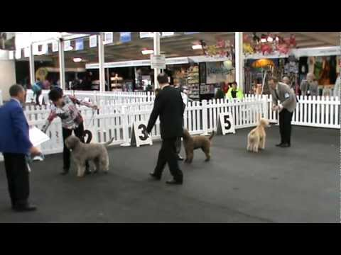 Lagotto Results Royal Melbourne Show 2011 (1).mpg