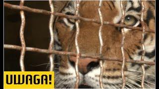 """""""Obóz kaźni dla zwierząt"""". Organizacje prozwierzęce: robili to dla pieniędzy!  (UWAGA! TVN)"""
