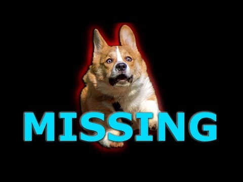 MY DOG IS MISSING! | Down Under New  Indie Horror Game 2017 | Let's Play New Horror Games