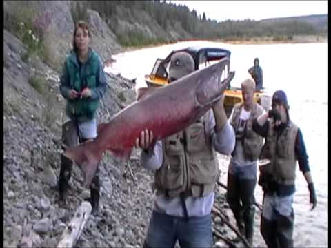 Shooting fish in a Barrel: King Salmon Fishing on the Klutina/ Copper River in Alaska Part 1 ...