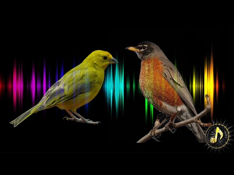 Bird Singing Sound Effect ~ Free Sound Effects