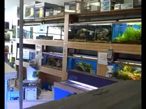 pondscape us clients ocean design aquarium store tour youtube. Black Bedroom Furniture Sets. Home Design Ideas