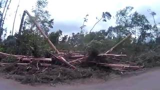 Las Września-Czerniejewo po wichurze z 11 sierpnia 2017