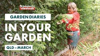 Gardening in March | Queensland | Bunnings Garden Diary