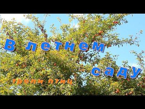 В летнем саду, трели птиц - Звуки природы / Summer Garden