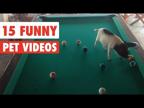 15 Funny Pet | Awesome Videos Compilation 2017