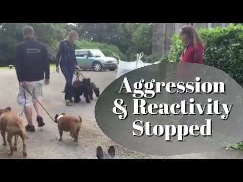 Dog Aggression & Reactivity stopped in minutes, Solid K9 Training