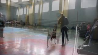 08.10.2016 Орша  - выставка собак - dog show - Тайский риджбек - Thai Ridgeback - R.S'S GOLD @ SIAM