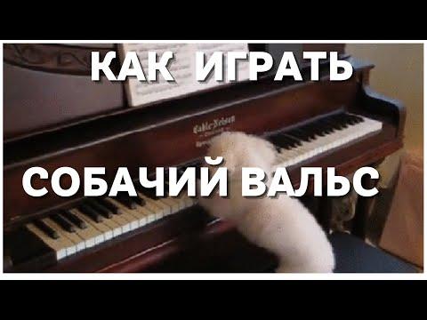 Как сыграть собачий вальс на игрушечном пианино