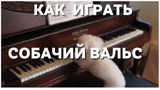 Как сыграть собачий вальс на пианино для начинающих