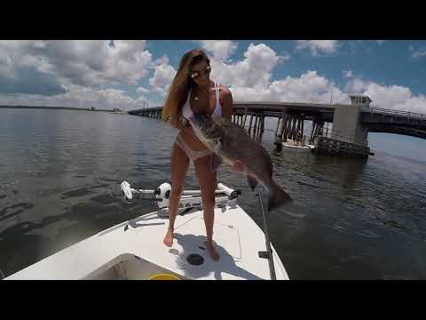 Black Drum Fishing With Fin & Fly Charters In Florida !