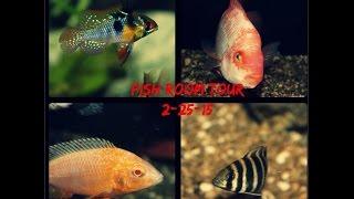 Fish Room Tour!