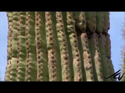 Lets Go Places prt 22 -  Arizona, from Sonoran Desert and Florence -  USA Travel -  YouTube