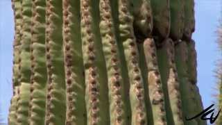Lets Go Places prt 22 –  Arizona, from Sonoran Desert and Florence –  USA Travel –  YouTube