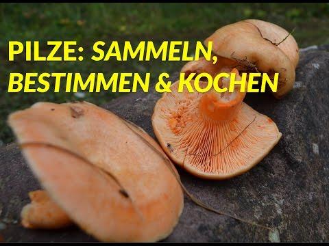 Alles über Pilze: Sammeln, Bestimmen & Kochen [Edelreizker, Maronen-Röhrling]   WildpflanzenTV
