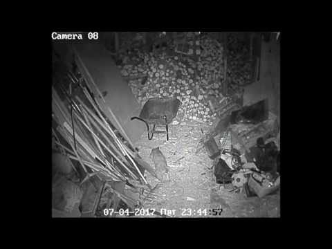 котяра гад жирный в сарае