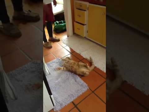 My Sister's Cat Does Tricks!
