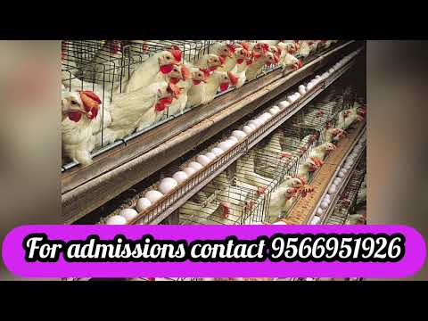 B.Tech in Poultry Production Technology course details | Scope | Job opportunities