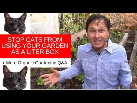 How To Stop Cats From Using Your Garden As A Litter Box + More Organic Q&A