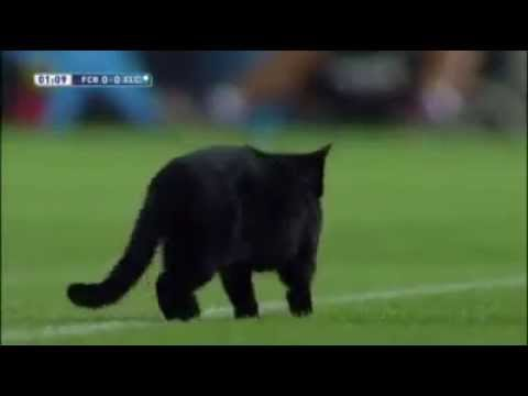 A cat in the stadium in Barcelona - Elche football match