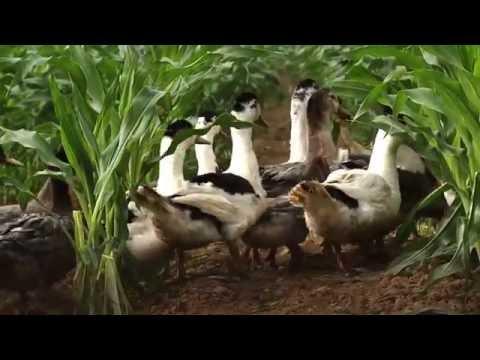"""""""Toqués de canard"""", un rendez-vous culinaire à ne pas manquer !"""