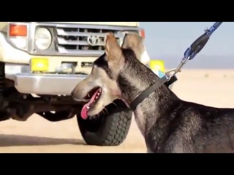 The fastest dog in the world 2016 HD