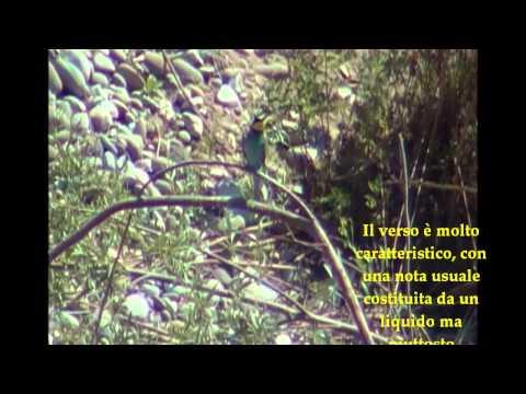 Il Gruccione – ALAC Onlus – Salvaguardia Ambientale Protezione Civile