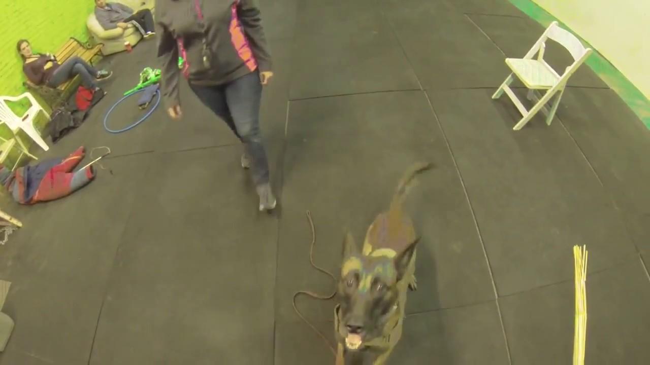 Protection Dog Training Chicago