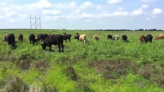 Video Life of a Farmer: August download MP3, 3GP, MP4, WEBM, AVI, FLV Juni 2018