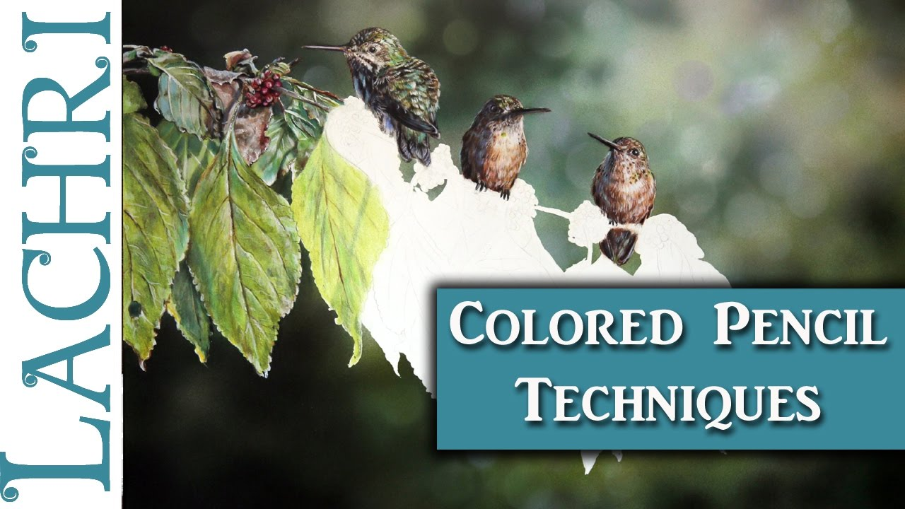Hummingbirds in Colored Pencil - Tips and Techniques w/ Lachri - YouTube